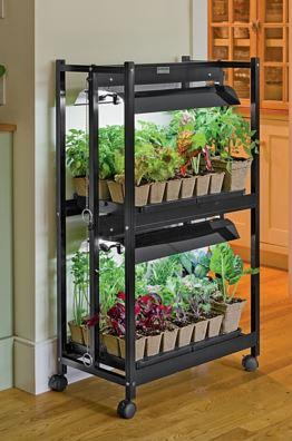 indoor gardening 1