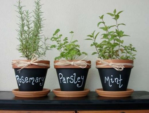 indoor gardening 2