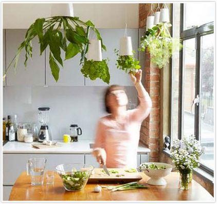 indoor gardening 4