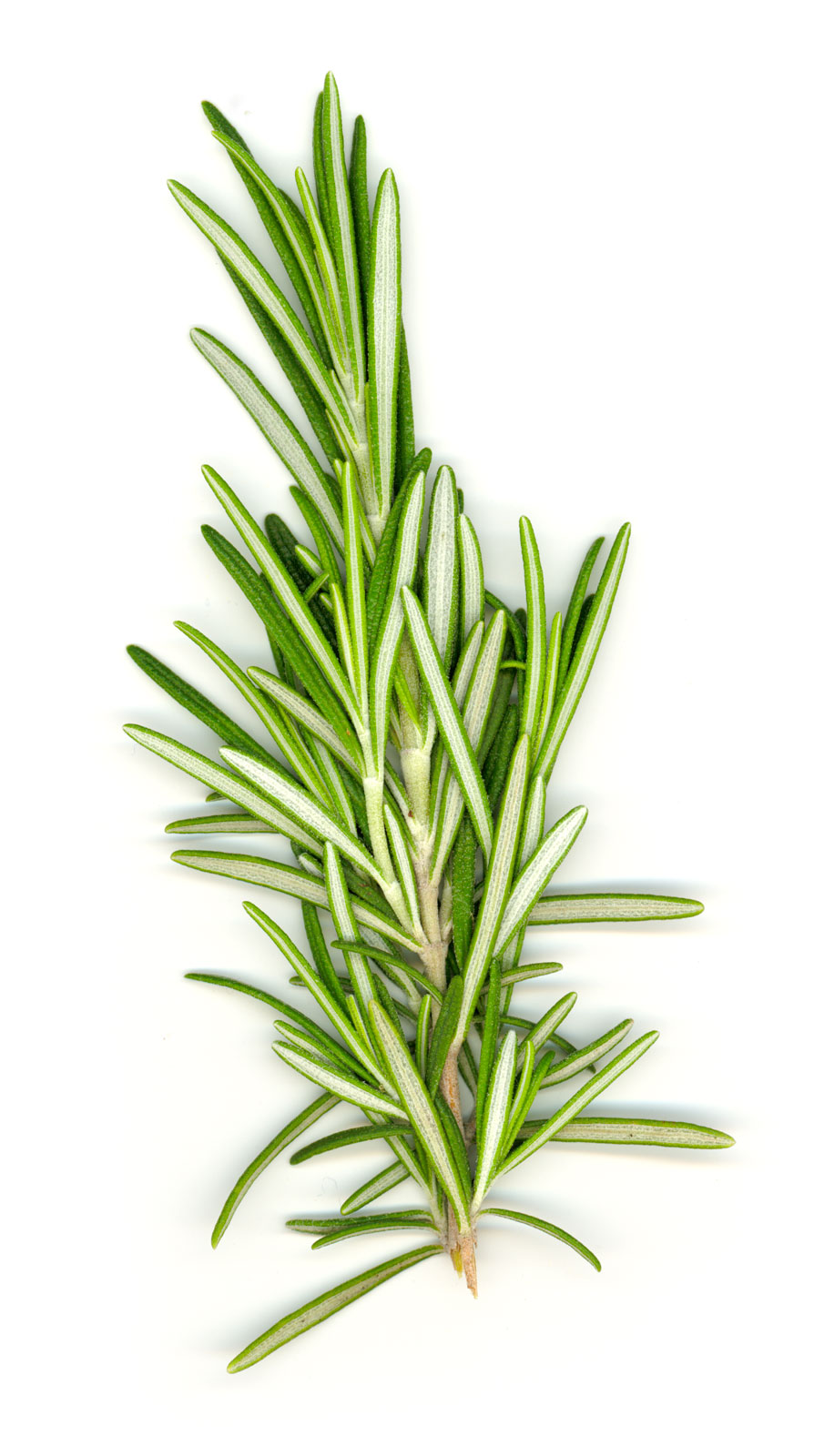 vitamin water recipe rosemary