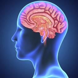 brain- hydration